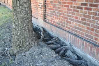 Daños por las raíces de los árboles