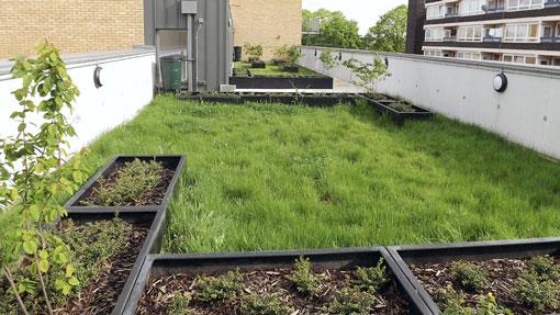 Ajardinamiento en los cubiertas vegetales